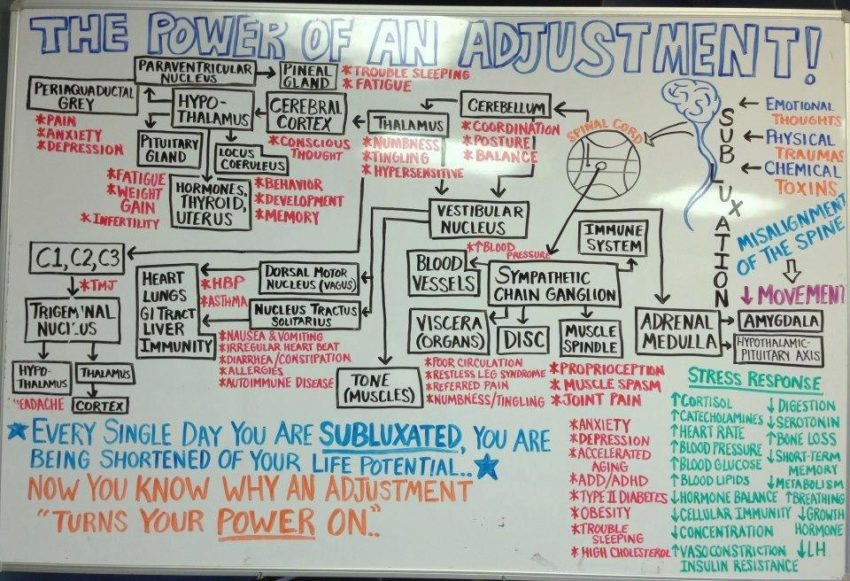 the-power-of-the-chiropractic-adjustment